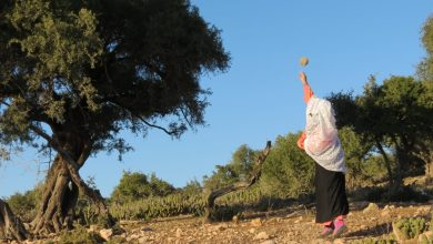 "Photo of "" شجرة الاركان النادرة على يد المرأة القروية في جبال سوس."