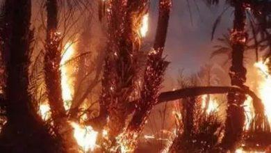 Photo of حريق يأتي على نحو 100 نخلة بواحة تيغمرت بكلميم